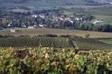 Champagne vineyard. Copyright: Jean Weber, INRA