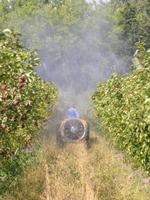 Orchard spraying